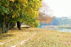 Autumn Landscape Forest Lake Fotografie Stock