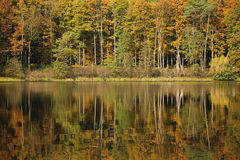 Autumn landscape with forest and lake Royalty Free Stock Image