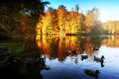 Autumn landscape with forest lake Royalty Free Stock Photography