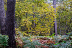 Autumn Landscape in the forest of Montmorency Stock Images