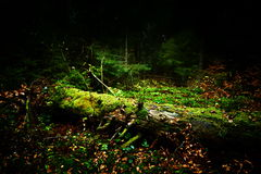 Autumn landscape in the forest Royalty Free Stock Images