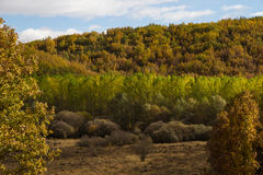 Autumn Landscape Forest Oaks, Poplars and Bushes Stock Photos