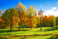 Autumn landscape Stock Photos