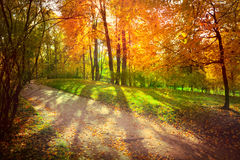 Autumn landscape Royalty Free Stock Image