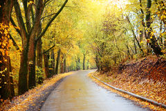 Autumn landscape in the forest with old road Stock Photography