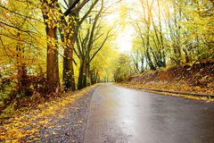 Autumn landscape in the forest with old road Stock Photos