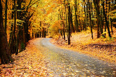 Autumn landscape in the forest with old road Stock Images