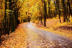 Autumn landscape in the forest with old road Royalty Free Stock Photography