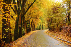 Autumn landscape in the forest with old road Royalty Free Stock Images