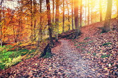 Autumn landscape with forest path Stock Image
