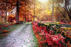 Autumn landscape with forest path. In red tone Stock Photos