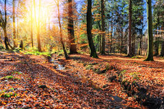 Autumn landscape with forest stream Royalty Free Stock Photography