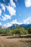 Autumn landscape Fornalutx Mallorca Royalty Free Stock Image
