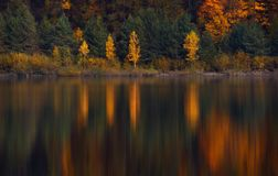 Autumn Landscape With Four Birches com folha amarela e sua reflexão colorida bonita na água imóvel de um Mounta pequeno imagens de stock royalty free