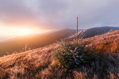Autumn landscape with frost Royalty Free Stock Image