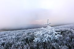 Autumn landscape with frost Royalty Free Stock Photo