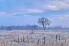 Frosted Tall Grass Prairie Stock Photos