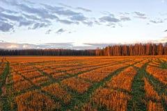 Autumn Landscape Gebied bij zonsondergang Royalty-vrije Stock Foto