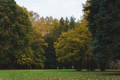 Autumn Landscape Giorno caldo di autunno in un parco luminoso di colore Fogliame ed alberi arancio nella foresta fotografia stock libera da diritti