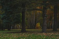 Autumn Landscape Giorno caldo di autunno in un parco luminoso di colore Fogliame ed alberi arancio nella foresta fotografie stock libere da diritti
