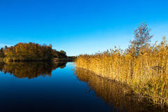 Autumn Landscape at a glassy lake. With reedbed stock image