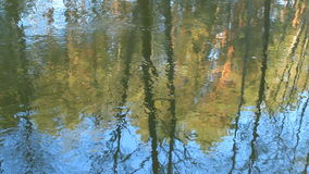 Autumn landscape, gloomy misty forest lake, reflection. stock video footage