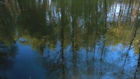 Autumn landscape, gloomy misty forest lake, reflection. stock footage