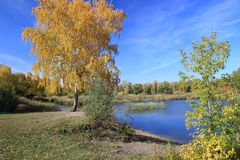 Autumn landscape - gold birch near pond Stock Photos