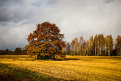 Vivid autumn landscape with golden field Stock Photography