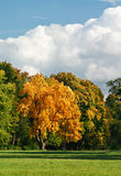 Autumn landscape with a golden oak Stock Photos