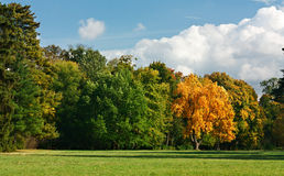 Autumn landscape with a golden oak in a green park Royalty Free Stock Photography