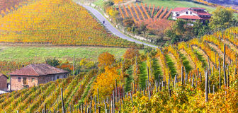 Autumn landscape. Golden vineyards of Piemonte. Italy Stock Image