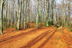 Autumn Landscape Goldene Blätter Stockfotografie