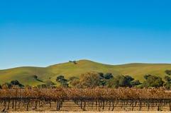 Autumn landscape of grape vines Stock Photo