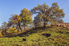 Autumn landscape with grazing goat Royalty Free Stock Photography