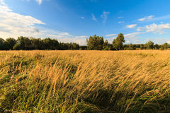 Autumn landscape with green grass on a meadow and cloudly sky Stock Image