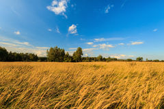 Autumn landscape with green grass on a meadow and cloudly sky Stock Photos