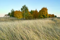 Autumn landscape the grove and meadow Stock Images