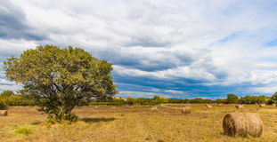 Autumn Landscape with haystacks field and single trees. Landscape with haystacks after harvesting of wheat and single tree at cloudy day Royalty Free Stock Photo