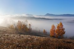 Autumn landscape of high mountains, orange coloured trees, fog. Sun rays enlighten the lawn with dry grass. Blue sky. Stock Photography