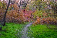 Autumn landscape. Hiking trail in the grove Royalty Free Stock Photos