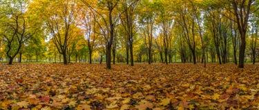 Autumn Landscape hojas caidas en el parque de la ciudad Imagen de archivo
