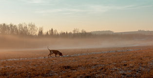 Autumn landscape with a hunting dog. stock photography