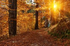 Autumn Landscape In Wood Stock Image