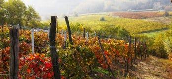 Autumn landscape of italian vineyard. An autumn landscape of italian vineyard stock photography