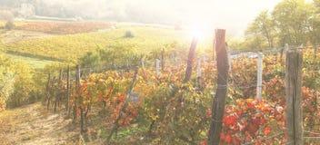 Autumn landscape of italian vineyard. An autumn landscape of italian vineyard royalty free stock photo