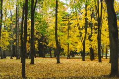 Autumn Landscape Jour chaud d'automne en parc lumineux de couleur Feuillage et arbres oranges dans la forêt photo libre de droits