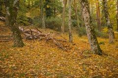 Autumn Landscape Kleurrijk de herfstbos stock foto