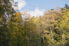 Autumn Landscape Kleurrijk de herfstbos royalty-vrije stock afbeelding