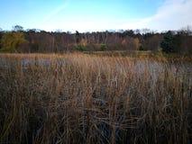 Autumn Landscape Künstlerischer Blick in den Weinlesekräftigen farben Lizenzfreies Stockfoto
